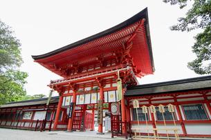 In front of Shimogamo Jinjaの写真素材 [FYI02345805]