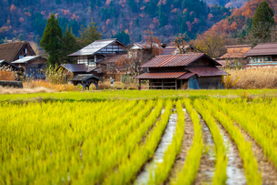 Shirakawa Villageの写真素材 [FYI02345828]