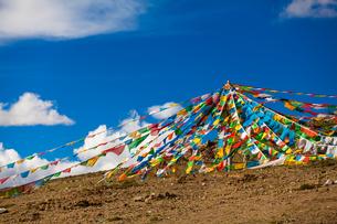 colorful flag in Tibetの写真素材 [FYI02345877]