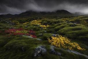 Autumnepilogueの写真素材 [FYI02345952]
