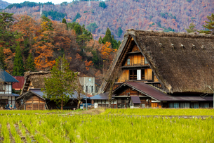 Shirakawa Villageの写真素材 [FYI02346027]