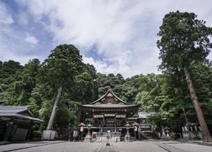 in front of Tsurugaoka Hachimangィの写真素材 [FYI02346075]