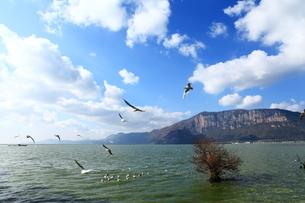 Birds fly through the lake; Kunming; Chinaの写真素材 [FYI02347352]