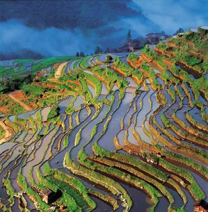 Jiabang terrace field;Guizhou Province;Chinaの写真素材 [FYI02347456]