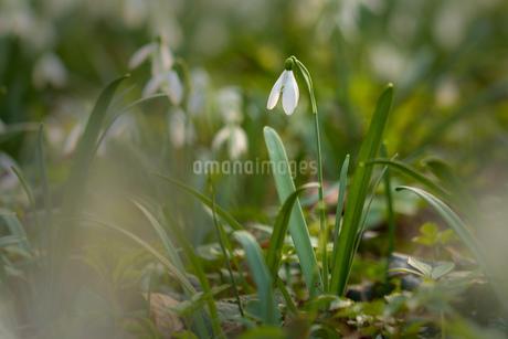 Flowerの写真素材 [FYI02347819]