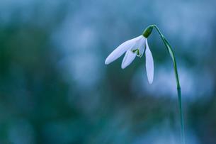 Flowerの写真素材 [FYI02347848]