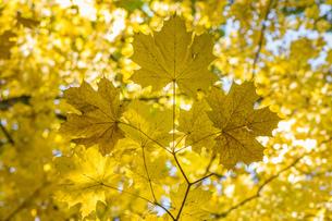 Autumnの写真素材 [FYI02347884]