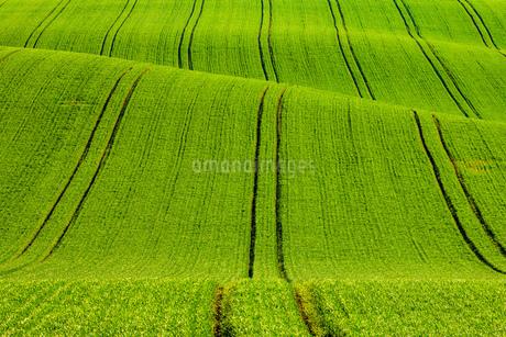 ruralの写真素材 [FYI02347891]