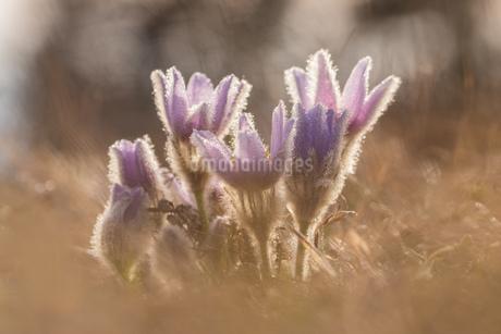 Flowerの写真素材 [FYI02347902]