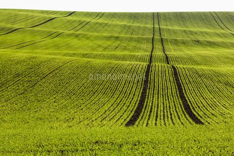 ruralの写真素材 [FYI02347907]