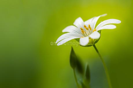 Flowerの写真素材 [FYI02347928]