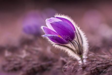 Flowerの写真素材 [FYI02347940]