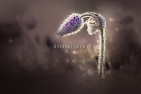 Flowerの写真素材 [FYI02347977]