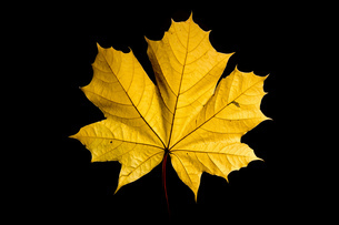 Leafの写真素材 [FYI02347979]