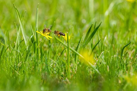 Beeの写真素材 [FYI02348013]