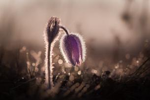 flowerの写真素材 [FYI02348017]