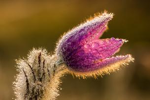 flowerの写真素材 [FYI02348020]
