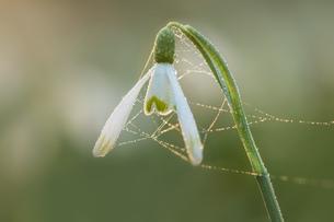 Flowerの写真素材 [FYI02348028]