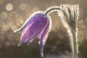 Flowerの写真素材 [FYI02348039]