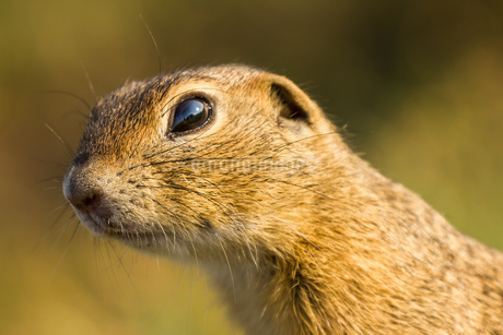 squirreの写真素材 [FYI02348072]