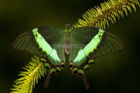 butterflyの写真素材 [FYI02348078]