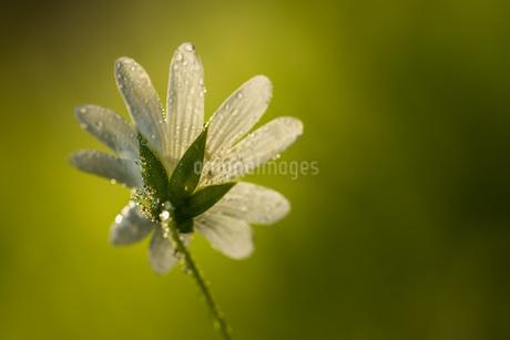 flowerの写真素材 [FYI02348098]