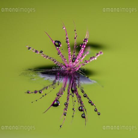 Flowerの写真素材 [FYI02348112]
