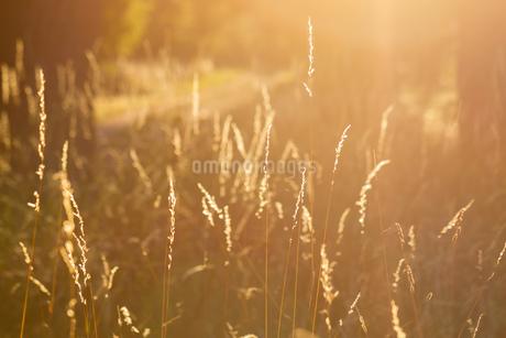 Summerの写真素材 [FYI02348134]