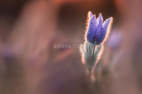 Flowerの写真素材 [FYI02348140]