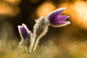 flowerの写真素材 [FYI02348150]