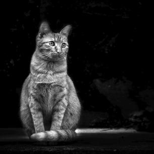 Abstract animalの写真素材 [FYI02348170]