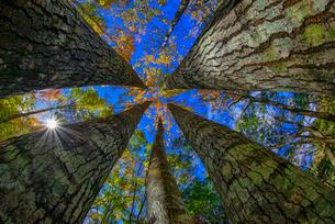low angle shot of the forest; in Xiuluan; Jianshi; Hsinchu; Taiwanの写真素材 [FYI02348171]