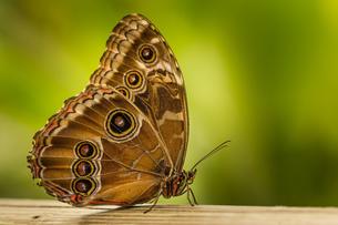 butterflyの写真素材 [FYI02348187]
