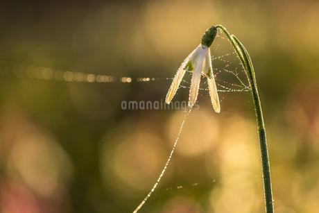 Flowerの写真素材 [FYI02348191]
