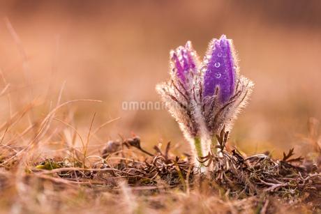 Flowerの写真素材 [FYI02348231]