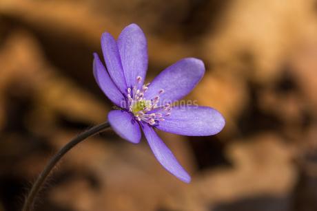 Flowerの写真素材 [FYI02348238]