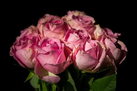 Flowerの写真素材 [FYI02348276]