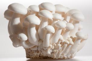 Mushroomの写真素材 [FYI02348346]