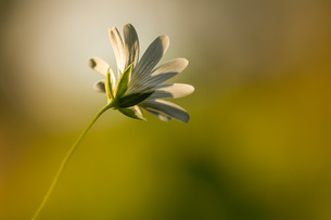 flowerの写真素材 [FYI02348486]