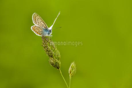 butterflyの写真素材 [FYI02348501]