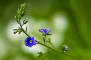 flowerの写真素材 [FYI02348544]
