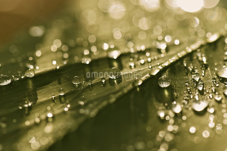 Rain;drops;Singaporeの写真素材 [FYI02348550]