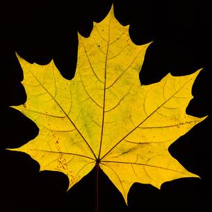 Leafの写真素材 [FYI02348575]
