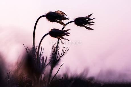 flowerの写真素材 [FYI02348585]