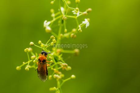 bugの写真素材 [FYI02348683]