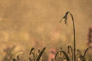 Flowerの写真素材 [FYI02348831]