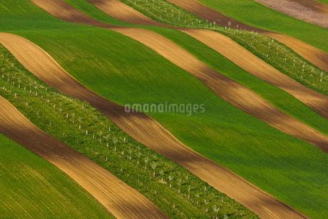 fieldの写真素材 [FYI02348901]