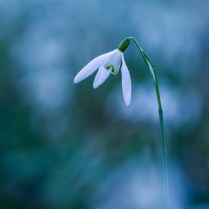 Flowerの写真素材 [FYI02348917]