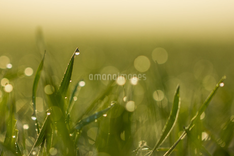 grassの写真素材 [FYI02348937]