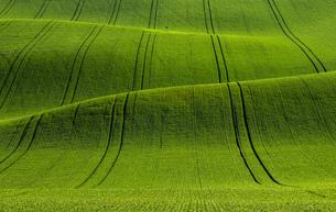 natureの写真素材 [FYI02348972]